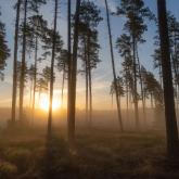 Las w świetle i we mgle