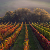 Barwy jesieni...