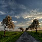 maj w gminie Pępowo
