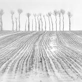linie i drzewa