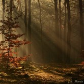 Jesienny las